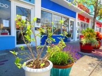 Colourful pot plants reflect the brightly painted semi-detached shops in Northwood Village, West Palm, Florida